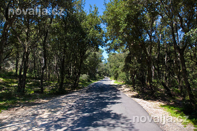 Cyklistická stezka vlese Dundo