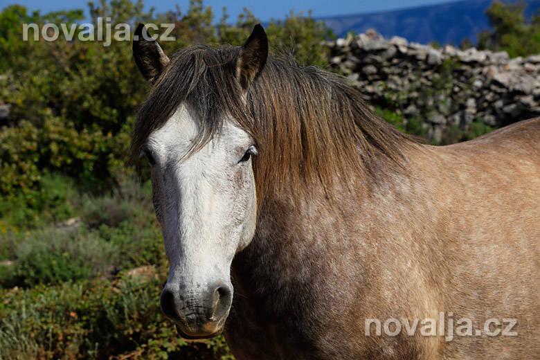 Koně na Hvaru