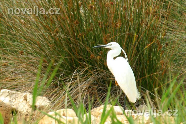 Ornitologická rezervace Velo Blato